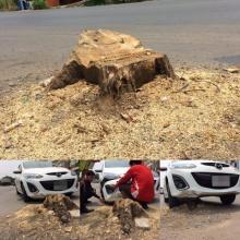 เตือนภัยคนใช้ถนน!! โดนมาหลายราย ตัดต้นไม้เหลือตอไว้แบบนี้