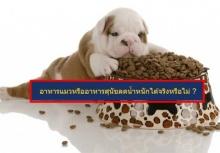 ร้อนจนคนเพี้ยน!!กินอาหารหมา ลดน้ำหนักได้จริงไหม?