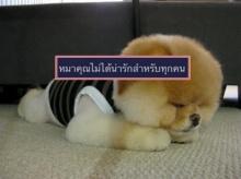 ดราม่า ! สาวกลัวหมาโพสต์ขอความเห็นใจ หมาคุณไม่ได้น่ารักสำหรับทุกคน