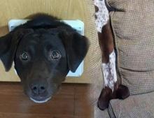 จะน่าสงสารหรือน่าขำดี กับภาพวันที่แสนเลวร้ายที่สุดของน้องหมาสุดน่ารักเหล่านี้