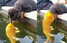 ฮาไม่มีหยุด!!! ชอตหมาจูบปลา ถูกตัดต่อกลายเป็นความฮาระดับโลก