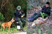 แชร์เรื่องราวประทับใจเรดาร์ หมาตาเดียว ช่วยทหารออกลาดตระเวน