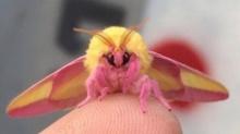 น่ารักสุดๆ!! แมลงที่เหมือนหลุดออกมาจากโลกการ์ตูน