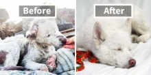 หล่อเลยย มาดู Before & After สุดอัศจรรย์ของเหล่าสุนัขที่ถูกช่วยเหลือกัน