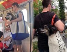 """จะมุ้งมิ้งไปไหน เมื่อคุณพ่อทำตามกฎรถไฟฟ้าใต้ดินที่ยอมให้พก """"น้องหมาในกระเป๋า"""" ได้"""
