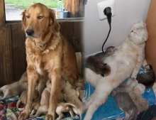 """สุดฮากับภาพของสัตว์ที่พิสูจน์แล้วว่าการเป็น """"แม่"""" นั้นมันยากแค่ไหน"""