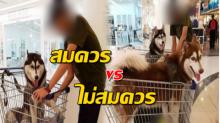 ชาวเน็ตดราม่า!! ทำได้หรือไม่ พาหมาตัวใหญ่ใส่รถเข็นของเดินเที่ยวห้าง!