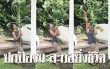"""พายุไต้ฝุ่นถล่ม!! แต่สาวคนนี้ปกป้อง """"ต้นมะละกอ"""" ยิ่งชีวิต!! #ส้มตำคือนิพพาน (มีคลิป)"""