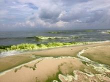 ชาวเน็ตแห่แชร์ภาพหาดสมิหลา น้ำกลายเป็นสีเขียวทั้งหาด(คลิป)
