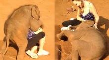 สื่อนอกตีข่าว! ลูกช้างไทยขี้อ้อน ใช้ปากงับ งวงกอด ไม่ให้นักท่องเที่ยวสาวกลับบ้าน