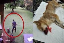 ฟังจากปากชัดๆ คนเห็นหนุ่มฟาดหมาจนตาย พร้อมเหตุผลที่ทำลงไป