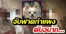 ใจเหี้ยม! หมาตัวน้อยถูกจับฟาดกำแพง เลือดสาดดับอนาถ