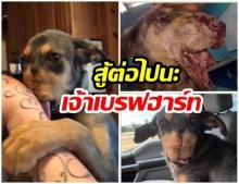 สุดยอดมาก เจ้าเบรฟฮาร์ท สุนัขหัวใจแกร่ง มนุษย์เอาประทัดยัดปากแต่ยังสู้เพื่อมีชีวิต