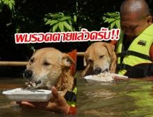 ทุกชีวิตมีค่า! พระสงฆ์ อาสาช่วยน้ำท่วมอุบลฯ ลุยน้ำป้อนข้าวสุนัข