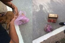 ชาวเน็ตจวกยับ คนใจบาป จับลูกหมายัดถุงพลาสติกทิ้งถนน