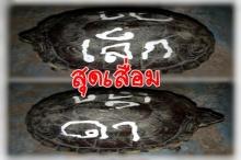 สงสารน้องเต่ามั้ย? คู่รักเขียนชื่อลงบนกระดองเต่า หวังให้ความรักยืนยาว โซเชียลวิจารณ์ยับ!