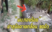 ใจอำมหิต!!!ผบ.กองร้อย ฆ่าสุนัขตายเกลื่อน 30 ตัว ต่อหน้าลูกน้อง