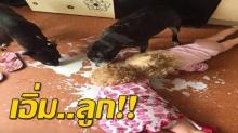 คุณแม่ฮา!! ประกาศขาย ลูกแฝดนรกแตก เล่นๆ หลังจับได้ว่าเลียนมหกพื้นกับหมา!