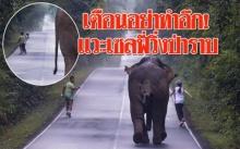 หวิดสยอง!!! สองหนุ่มสาววิ่งเรียบป่า แวะเซลฟี่กับช้างก่อนโดนวิ่งไล่ป่าราบ!!