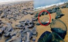 หนุ่มเดินเล่นแถบริมทะเล ก่อนเจอวัตถุประหลาด? คล้ายพลาสติกสีฟ้าใส พอเข้าไปดูใกล้ๆ รวยไปทั้งชาติ!!