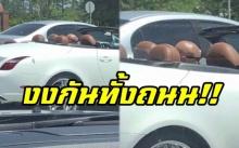 รถหรูวิ่งอยู่กลางถนน นึกว่าไม่มีคนขับ แต่พอซูมเข้าไปดูชัดๆ ถึงกับฮาลั่น!! (มีคลิป)