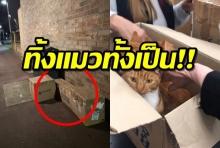 สุดสลด ! แมว11ตัวถูกทิ้งใส่กล่องปิดแน่นหนา สาวใจดีช่วยให้รอดตาย(คลิป)