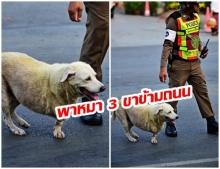 ภาพสุดน่ารัก ตร.กั้นรถพาน้องหมา 3 ขา ข้ามถนน เกรงว่าจะถูกรถชน ที่หน้าวัดพระธาตุหริภุญชัย ลำพูน