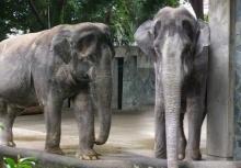 เศร้า!!ฮานาโกะ ช้างไทยในญี่ปุ่นตายแล้ว!!!