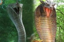 """จับชน !! ซีจีเอฟเฟคท์ """"งู"""" จากละครช่อง 3 และ ช่อง 7 ใครโดนใจคนดูกว่ากัน"""