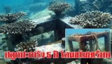 สะเทือนใจ! อ.จุฬา เฝ้าปลูกปะการัง 5 ปี ดำน้ำตรวจถึงกับตะลึงหายเรียบ