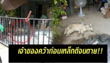 ชาวบ้านสุดทน!! แจ้งตร.จัดการ เจ้าของสุนัขคว้าเหล็กตีสุดทารุณกลางหมู่บ้านโยนทิ้งไม่สนใจ!