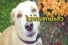 หมาแสนเศร้าที่สุดในโลกไม่ต้องตายแล้ว มีผู้มาขอเลี้ยงรอบใหม่