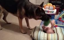 คุณแม่สงสัยเสียงที่ได้ยินจากห้องของลูกน้อย จึงไปดูและพบว่า..สุนัขทำสิ่งๆนี้กับลูกของเธอ? (มีคลิป)