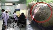 ขบวนการลักลอบค้าหนังช้าง วางยาพิษ ยังไม่ตายสนิท แล้วถลกหนัง ทารุณ!