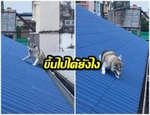 โซเชียลแห่แชร์คลิป ช่วยน้องหมาติดหลังคาบ้าน สุดท้ายลงได้ปลอดภัย