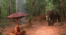 แชร์สนั่น!!! ภาพช้างคุกเข่าใส่บาตรต่อหน้าหลวงตา