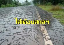 ขนลุกซู่! ไส้เดือนสกลฯนับล้านตัว หนีน้ำท่วมไต่ขึ้นมาอยู่เต็มถนน