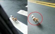 สุนัขวิ่งไล่กวดรถเมล์ไม่หยุด จนเหนื่อยหอบ โชเฟอร์ต้องขับให้ช้าลง ก่อนรู้สาเหตุ? สะเทือนใจสุดๆ