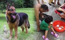 ลูกสาวหายไป 2 ปี ยังหาไม่พบ จนกระทั่งจู่ๆ สุนัขที่เลี้ยงไว้ ก็พุ่งเข้าหาเด็กขอทานที่ตลาด?
