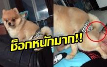 ทำไมทำแบบนี้!! เจ้าของถึงกับช็อก เมื่อน้องหมาทำพฤติกรรมที่ไม่คาดคิด? (มีคลิป)