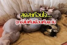 สลด!น้องเหมียวคาเฟ่แมวย่านวัชรพล ถูกทารุณขังกว่า 50 ตัว แถมยังแช่แข็งในตู้(คลิป)