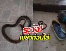 แชร์อุทาหรณ์เตือนภัย! ผู้ปกครองต้องระวัง สัตว์อันตรายหลบร้อนซุกรองเท้า!