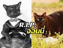 เศร้า! จอนนี่ อาตแมว ไอดอลขวัญใจโซเชียล จากไปอย่างสงบหลังป่วยหนัก