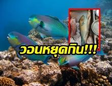 มนุษย์บริโภคทุกอย่าง!! หนุ่มโพสต์เศร้าหลังเห็นปลานกเเก้วสัตว์ทะเลที่ควรอนุรักษ์ต้องตาย