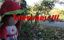 โคตรหลอน ! โค้งดังชัยนาท แขวนซากตุ๊กตาบนต้นไม้