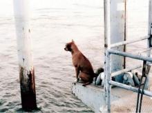 น้องหมา ตกเรือโยงนั่งรอคอยเจ้าของกลับมารับนานนับเดือน!!