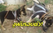 เจ้าของช็อก! หมาน้อยโดนงูพันรอบตัว มองไปมองมา เอ๊ะ! ไม่ใช่อย่างที่คิด!