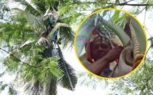 หนุ่มใช้ชีวิต กิน-นอนบนต้นมะพร้าวมาตลอด 3 ปี ไม่เคยลงมา เพราะกลัวมีคนมาฆ่า!? (คลิป)