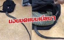 เห็นแล้วสยอง!! งูตัวมหึมา เลื้อยเข้ากระเป๋า นอนขดแบบเนียนๆ ถ้าไม่เห็นก่อนคงมีช็อก!! (มีคลิป)