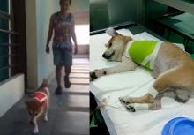 เจ้าลอยด์ หมาถูกโจรตัดขา กำลังใจดีมากหัดวิ่ง 3 ขาแล้ว(คลิป)